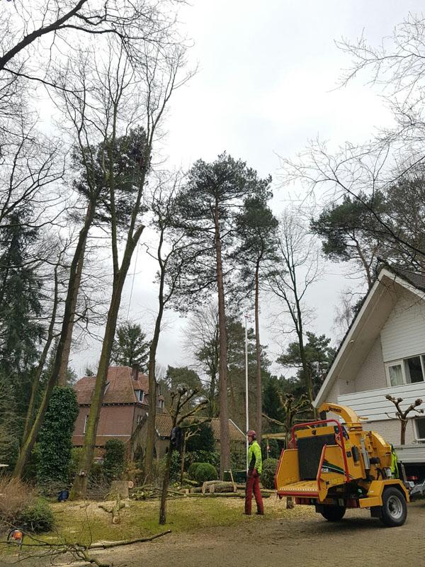 De Bomenrooier.nl | KAPPEN, VELLEN, OMZAGEN, ROOIEN